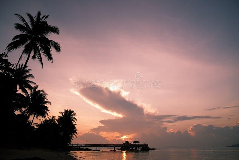 Salida del sol rosada con el árbol de coco imágenes de archivo libres de regalías