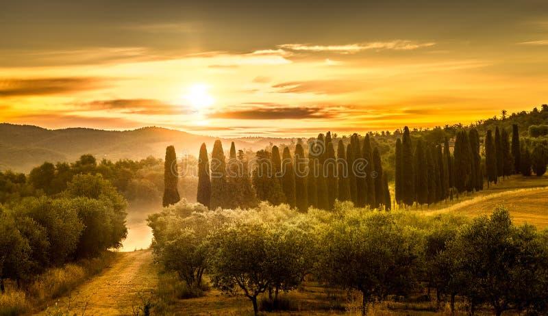 Salida del sol sobre campo verde oliva imágenes de archivo libres de regalías