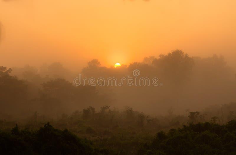 Salida del sol sobre el bosque de la selva, Chitwan, Nepal imagen de archivo libre de regalías