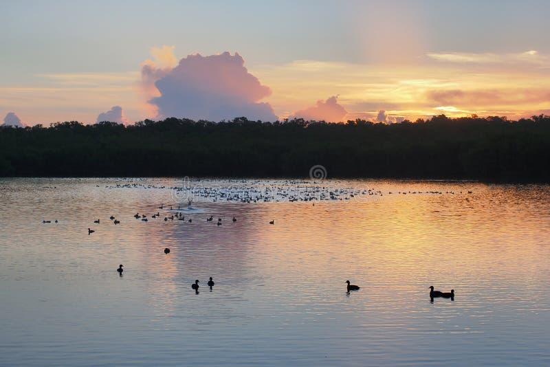 Salida del sol sobre el lago del oeste en parque nacional de los marismas fotografía de archivo