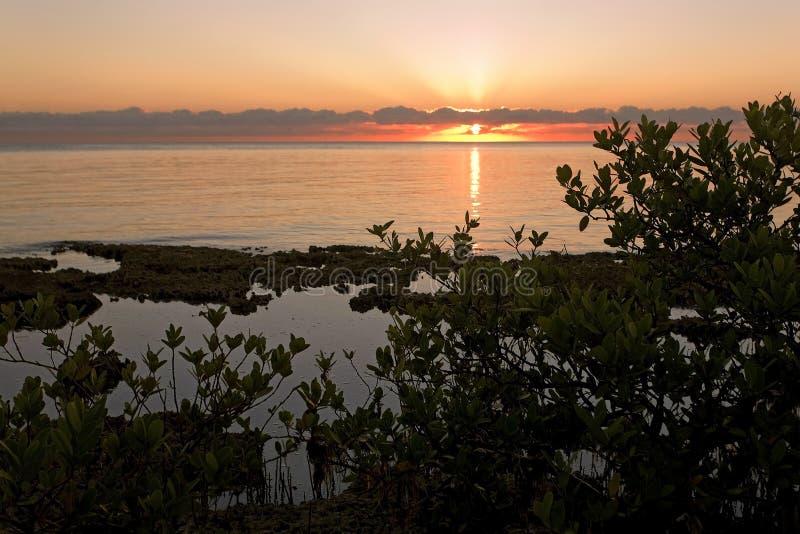 Salida del sol sobre el mar del Caribe y mangles imagen de archivo libre de regalías