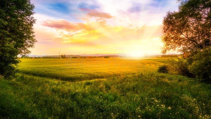 Salida del sol sobre un campo de maíz foto de archivo libre de regalías