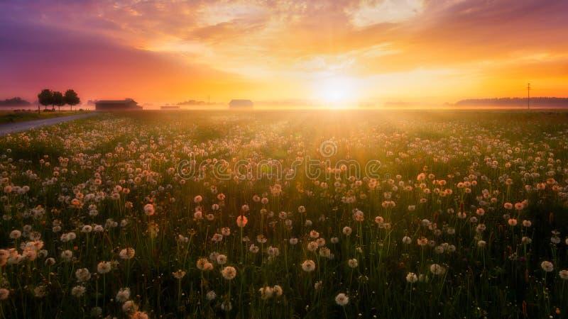 Salida del sol sobre un prado de la flor foto de archivo
