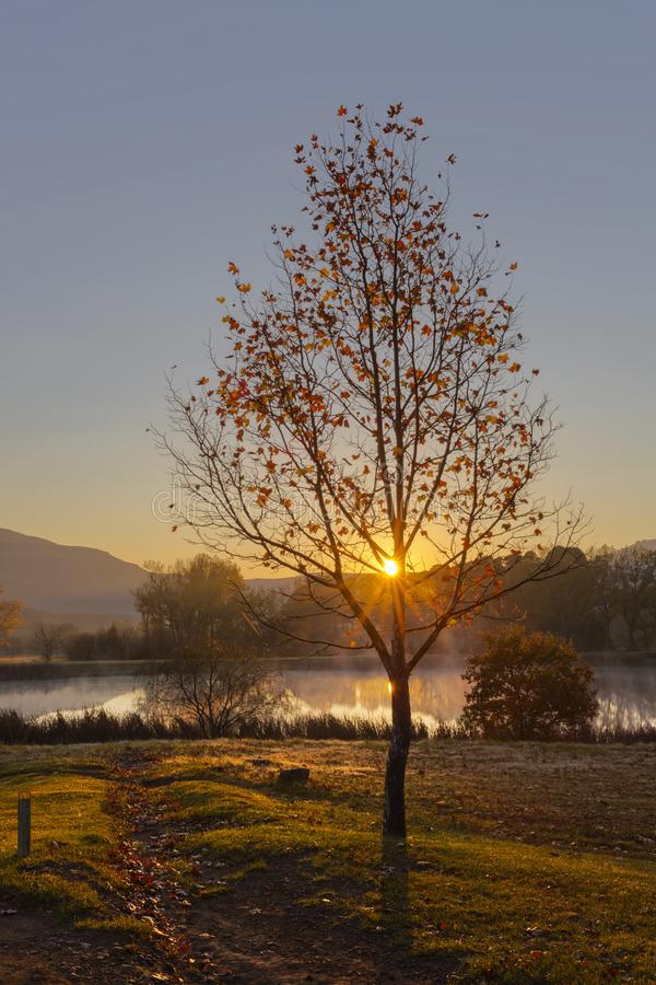 Salida del sol a través de un árbol coloreado otoño imagen de archivo