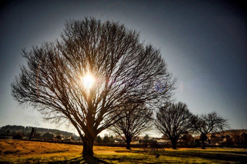 Salida del sol a través del árbol fotos de archivo