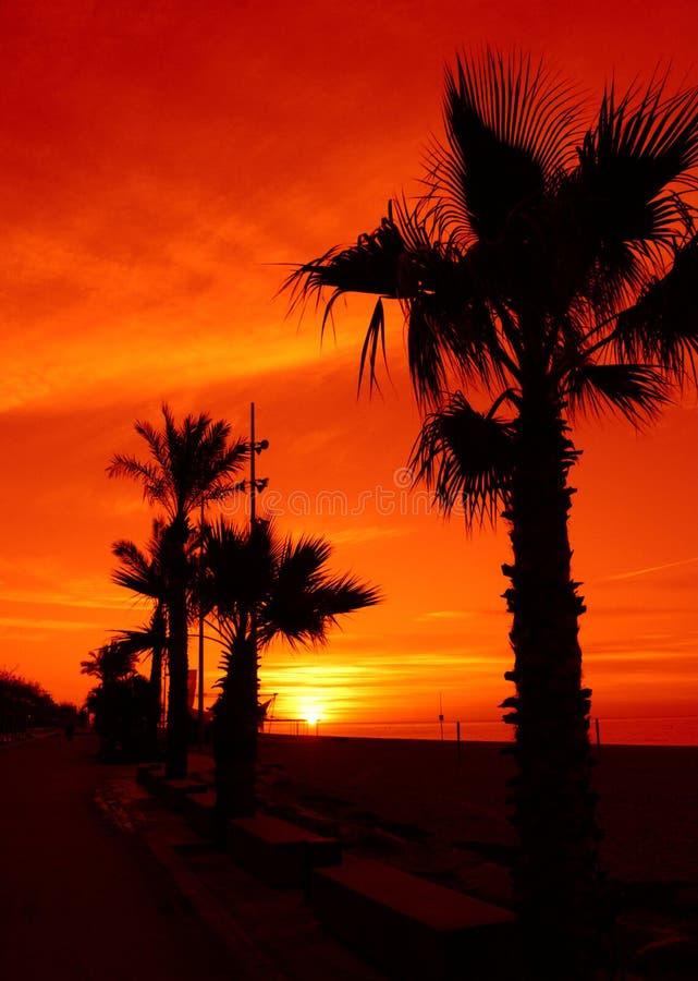 Salida del sol tropical espectacular fotografía de archivo libre de regalías
