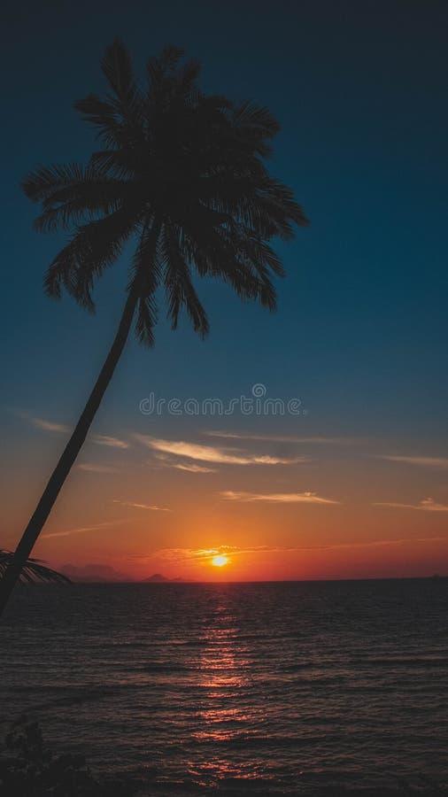 Salida del sol y árbol de coco en la isla lemukutan imagen de archivo libre de regalías