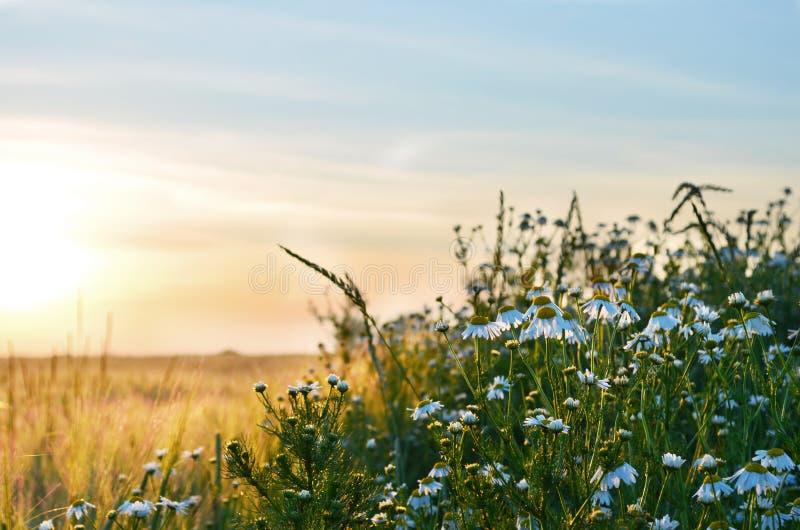 Salida del sol y flores fotografía de archivo libre de regalías