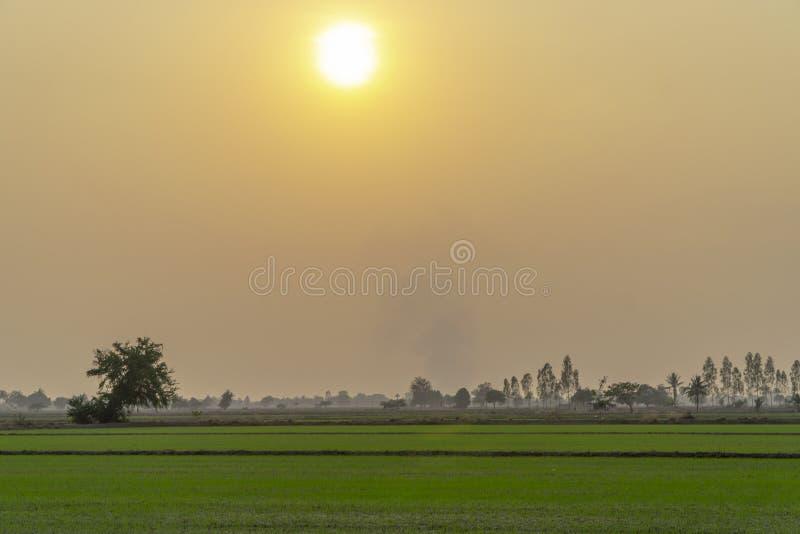 Salida del sol y niebla del arroz sobre campos por mañana imagen de archivo libre de regalías