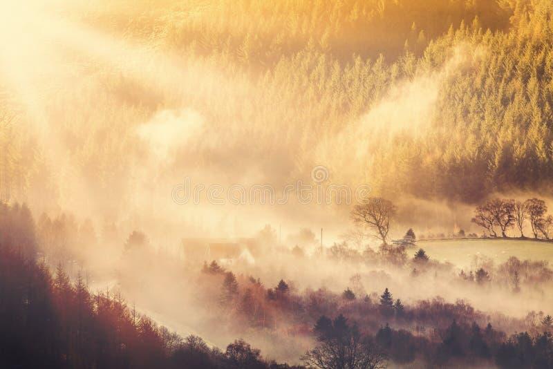 Salida del sol y niebla del campo fotografía de archivo libre de regalías