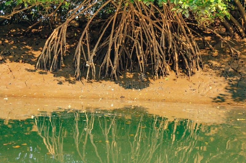 Salim Ali Bird Sanctuary, Goa, India royalty-vrije stock foto