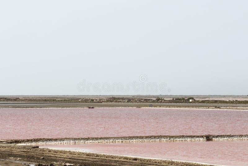 Salin du Mas des Crottes, Camargue i Frankrike arkivfoto