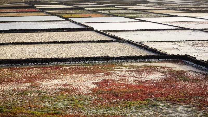 Salinas de Janubio sulla costa di Lanzarote in isole Canarie Estrazione di sale marino immagine stock libera da diritti