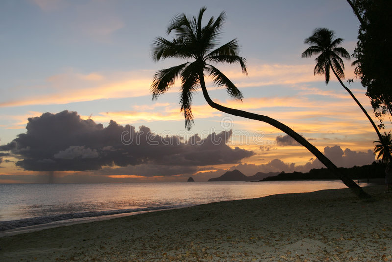 Salines beach, Martinique, Caribbean stock photography