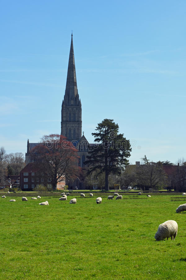 Salisbury domkyrka från vattenängar, Wiltshire, England royaltyfria bilder