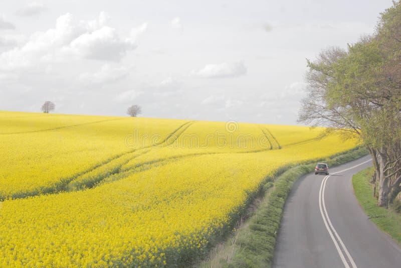 Salisbury fält arkivfoto