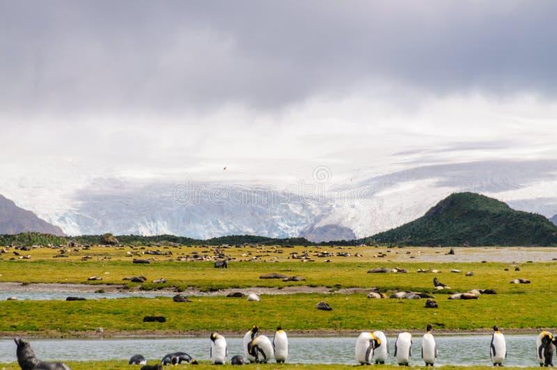 Salisbury Plains landscape. Salisbury Plains in front of a giant glacier royalty free stock photo