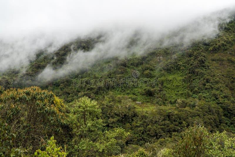 Salkantay que emigra Perú imagen de archivo libre de regalías