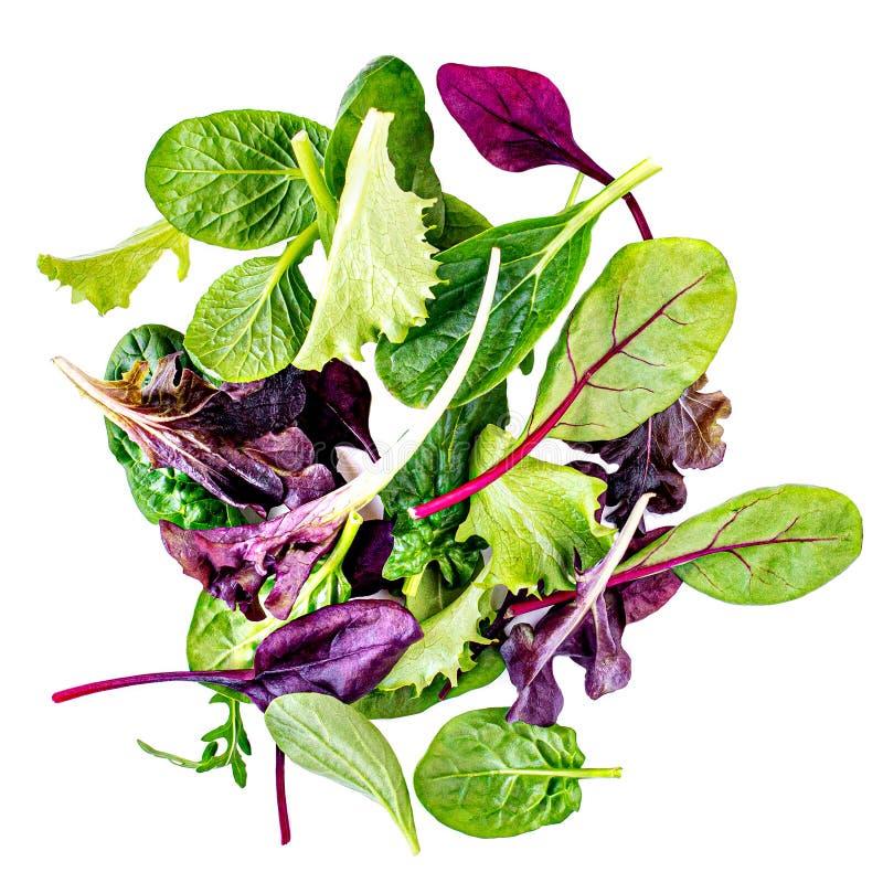 Salladblandning med rucola, frisee, radicchio, charden och vårklynne isolerad salladwhite f?r bakgrund green arkivfoto