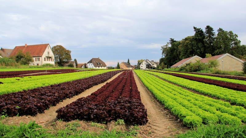 Salladfält och byn royaltyfri fotografi