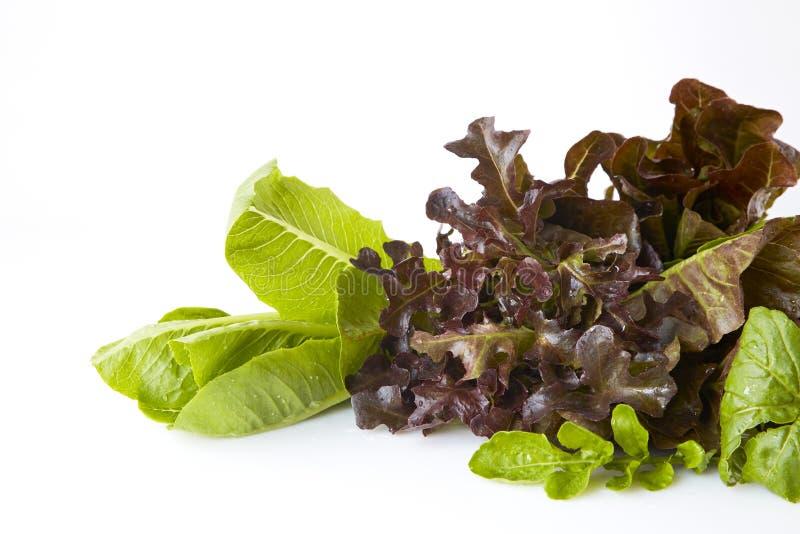 Salladgräsplaner, örter äta som är sunt royaltyfri foto