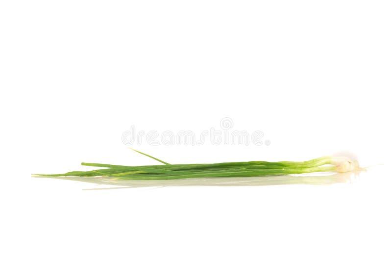 Salladslök-/vårlök på den vita bakgrunden royaltyfria foton