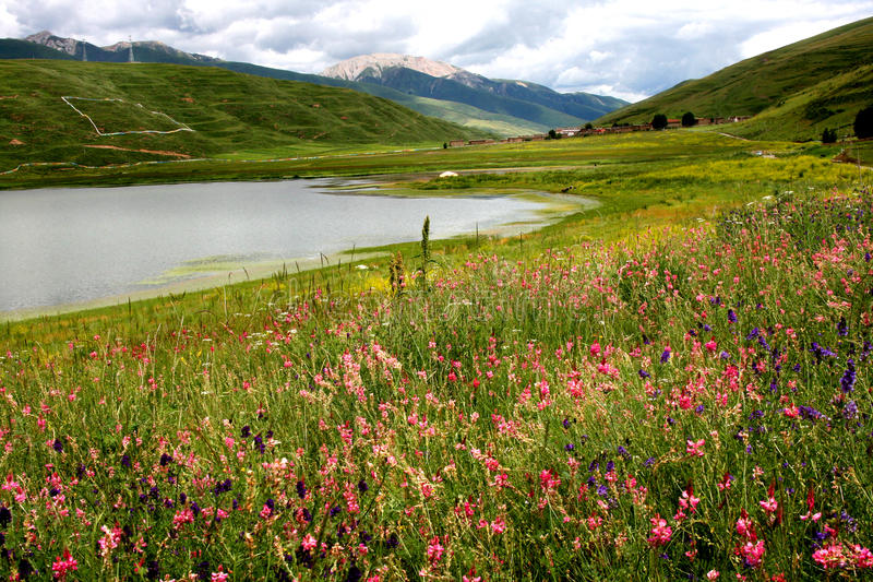 sally karciana jeziorna sceneria obrazy royalty free