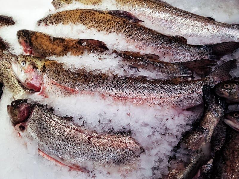 Salmões inteiros no gelo para a venda no mercado de peixes da rua imagem de stock