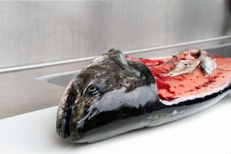 Salmões massacrados com peixes do sável imagens de stock