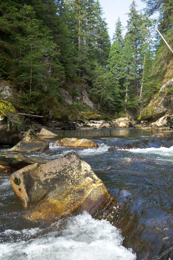 Salmões que desovam a angra no Columbia Britânica noroeste imagens de stock royalty free