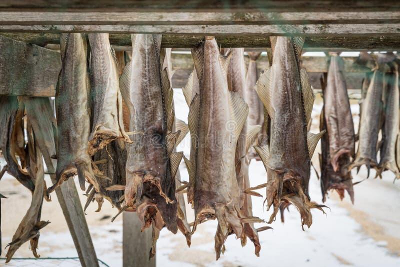 Salmões secados em Noruega fotos de stock