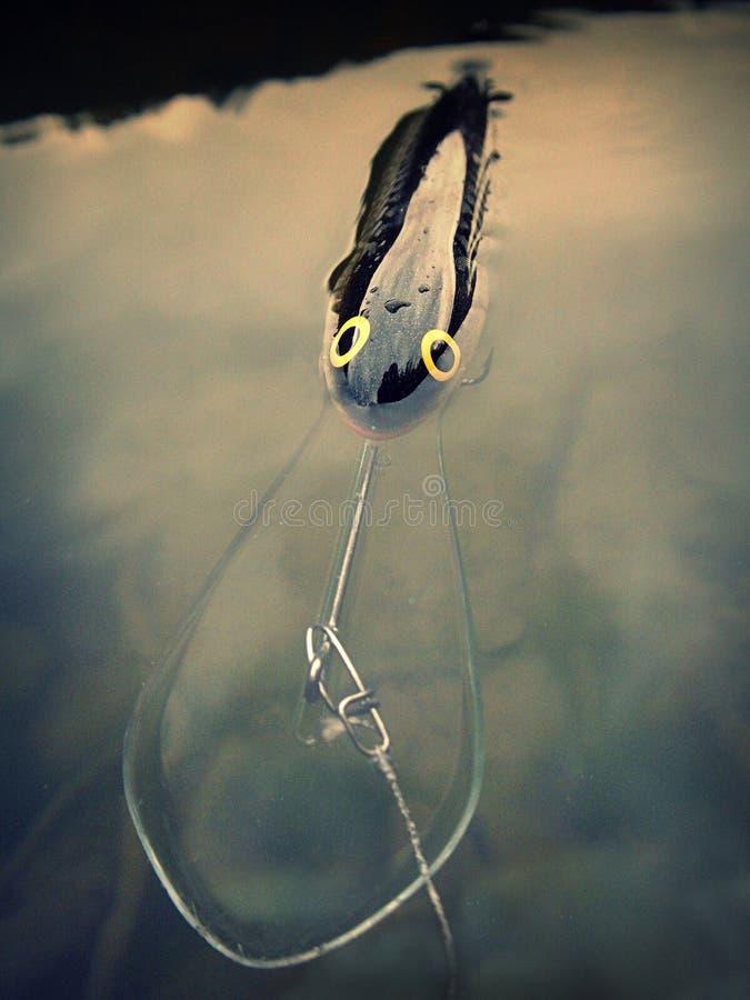 Salmo-Maräne Läufer des Fischködersteckers tiefe lizenzfreies stockbild