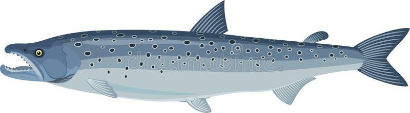 Salmo Salar del salmone atlantico di vettore illustrazione vettoriale