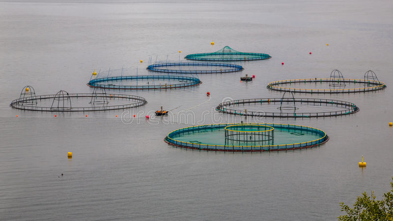 Salmon ферма в Норвегии стоковые изображения rf