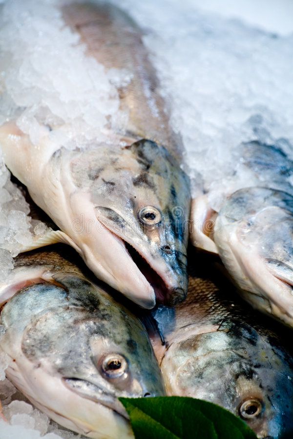 Download Salmon Stock Images - Image: 2317084