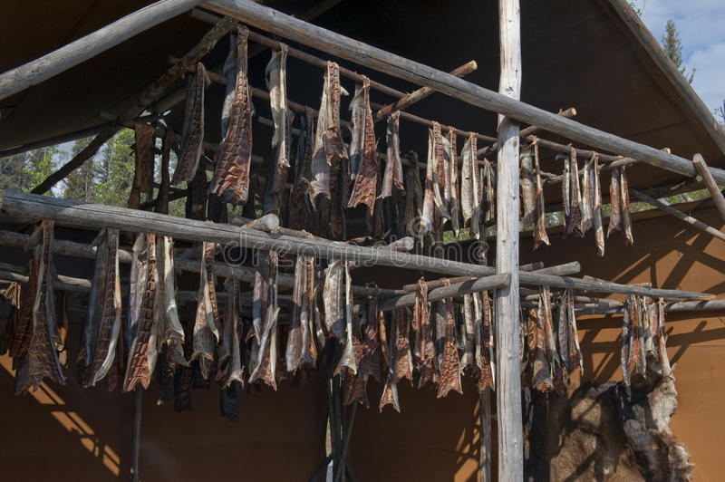 Salmon being smoked on rack. Fresh salmon hanging from a large overhead rack, being smoked in an native Alaskan smoke house royalty free stock photos