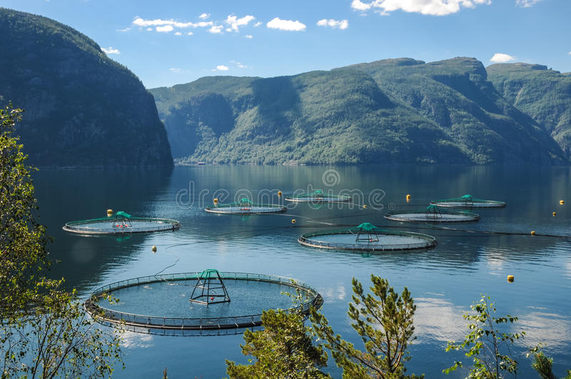 A salmon farm in a fjord in Norway stock image