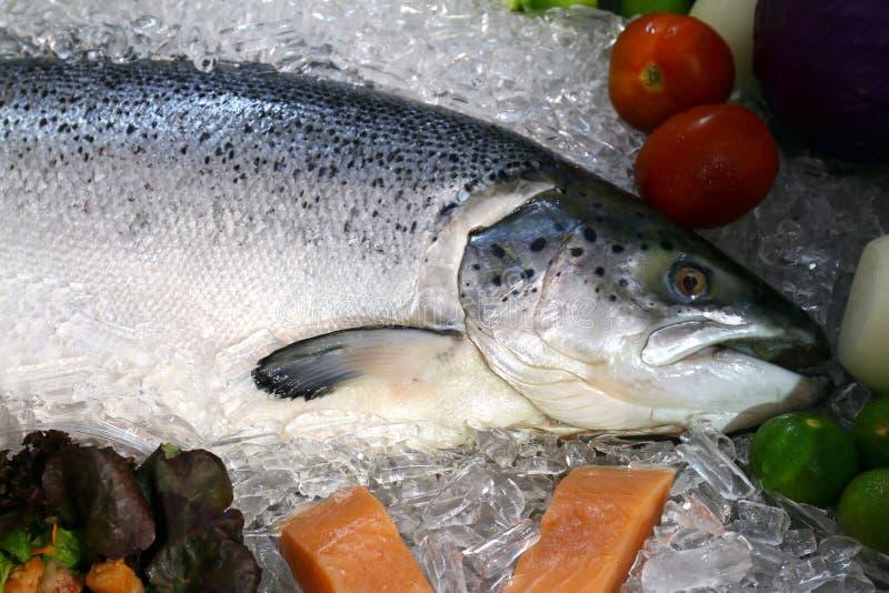 Salmon fish, Salmon large raw fresh on tray of ice close up stock photography