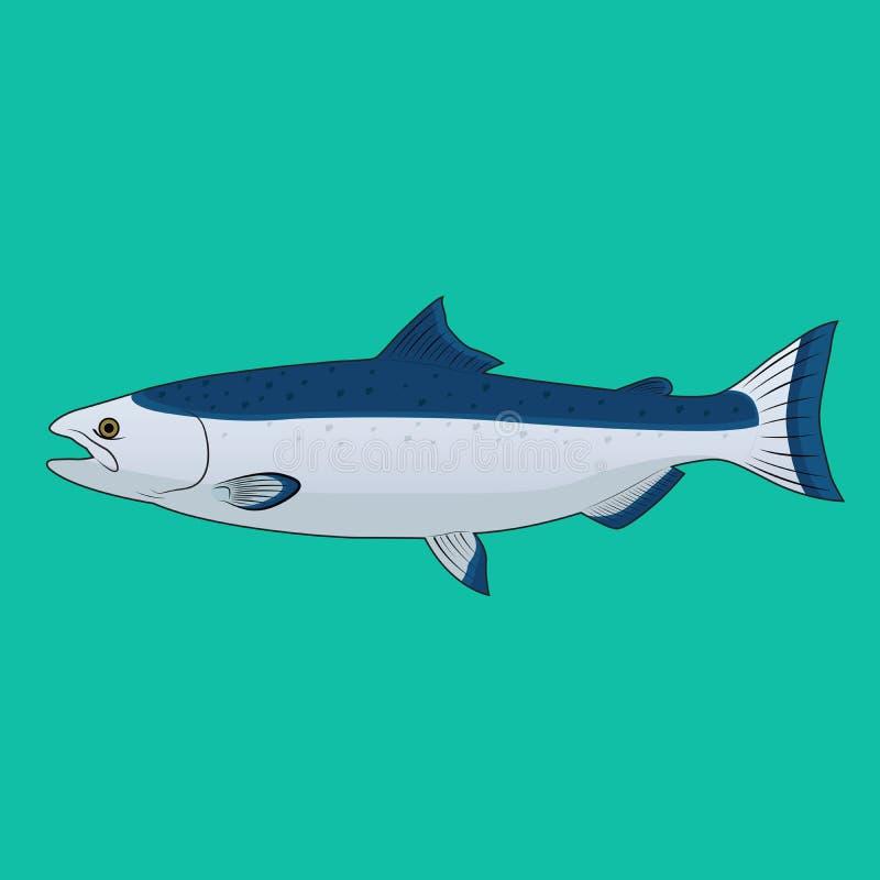 Salmon Fish Vector stock illustrationer