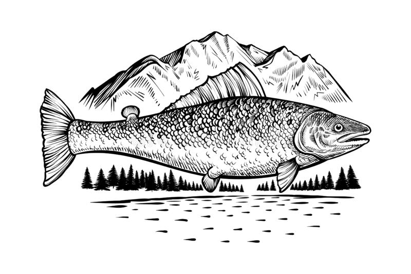 Salmon fish in wild nature. Vector engraving style drawing. stock illustration