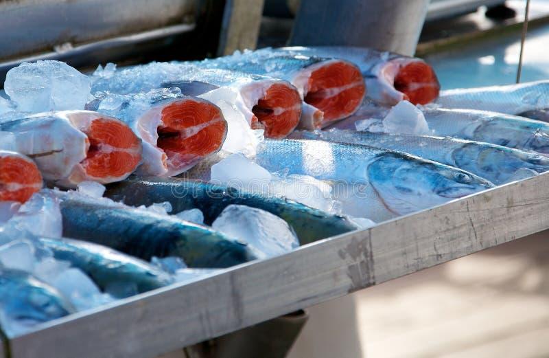 Salmon at market stock photos