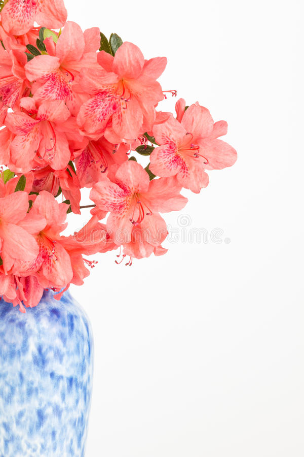 Attractive Salmon Pink Flower Arrangement Stock Image - Image of nature  OH77