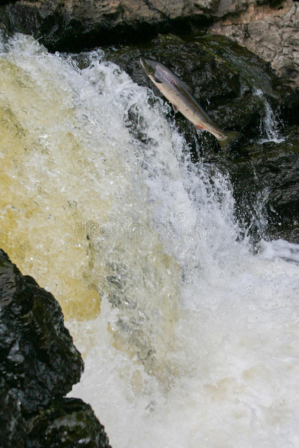 Salmon river jump stock image