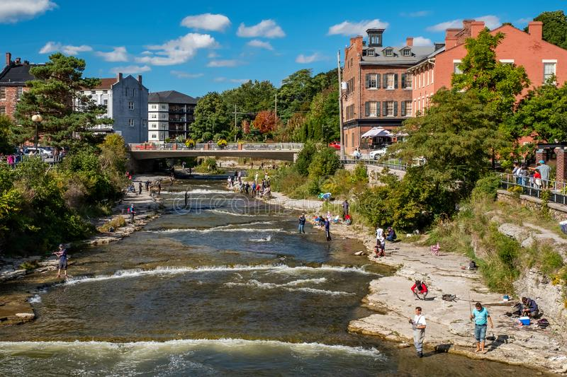 Salmon Run, Ganaraska River, Port Hope. Port Hope, Ontario, Canada - September 22, 2018: A view of the Ganaraska River in downtown Port Hope, with dozens of royalty free stock image