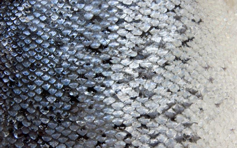 Salmon scales stock photos