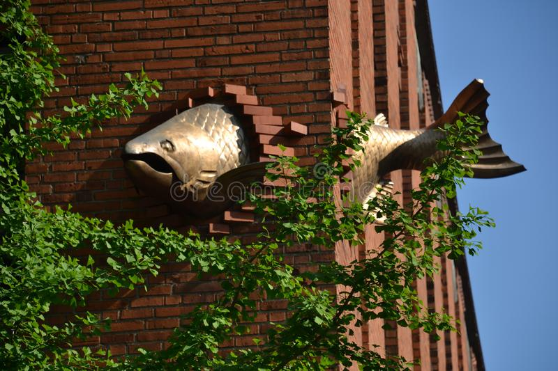 Salmon Sculpture decorates building wall in Portland, Oregon. This salmon sculpture decorates a building wall in downtown Portland, Oregon royalty free stock image