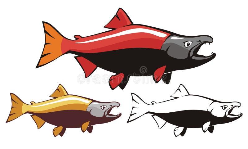 Salmon Sockeye Fish Vector images stock