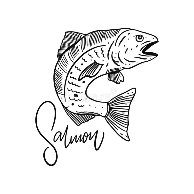 Salmone atlantico del pesce Illustrazione disegnata a mano di vettore Stile dell'incisione illustrazione di stock