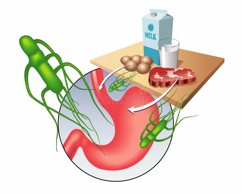 Salmonella virus. Medical illustration showing the salmonella virus and the main contaminated foods stock illustration