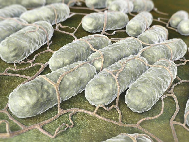 Salmonellenbakterien lizenzfreie abbildung